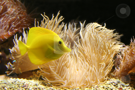 Golden fish stock photo,  by Stelian Ion