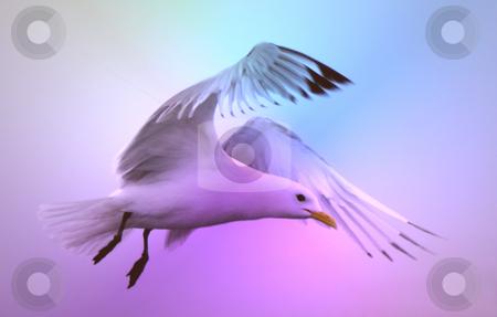 Beautiful seagull stock photo, Beautiful seagull flying by Stelian Ion