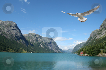 Flying seagull and norwegian fjords stock photo, A seagull flying over the sea - beautiful landscape from norwegian fjords by Stelian Ion