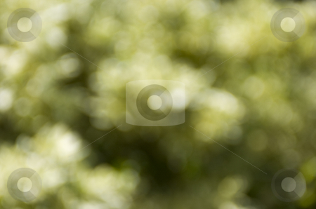 Blurry flower background stock photo, Blurry flowers by Andreas Brenner