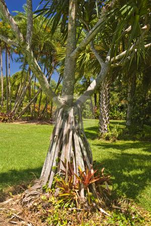 Tropical Garden stock photo, Beautiful trees at the Palma Sola Botanical Garden in Bradenton, Florida. by Steve Carroll
