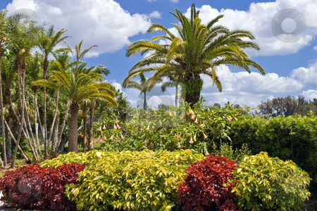 Tropical garden stock photo, A lush tropical botanical garden. by Steve Carroll