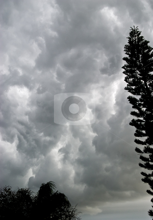 Storm Clouds with Trees stock photo, Storm clouds gather over Florida, with trees and copyspace. by Steve Carroll