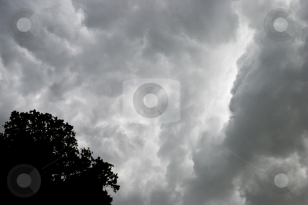 Florida Storm Clouds stock photo, Storm clouds over Florida with Cypres tree in corner. by Steve Carroll