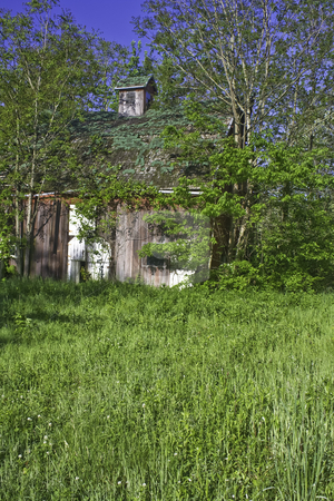 Old barn in the woods and green grass stock photo, Old barn in the woods with green grass vertical by Stephen Goodwin