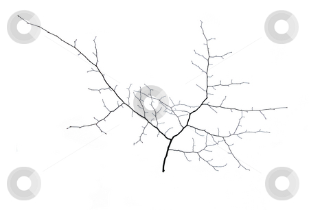 Small tree stock photo, A small tree in winter in deep snow by Pavel Cheiko