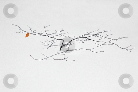 A small tree  stock photo, A small tree in winter in deep snow by Pavel Cheiko