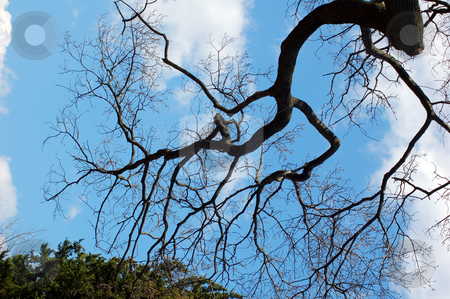 Branches stock photo, Trees against blue sky and clouds by Pavel Cheiko