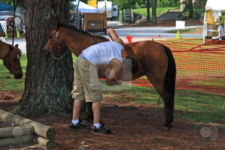 Grooming Horse stock photo, Young Man grooming a horse at a Park by Jack Schiffer