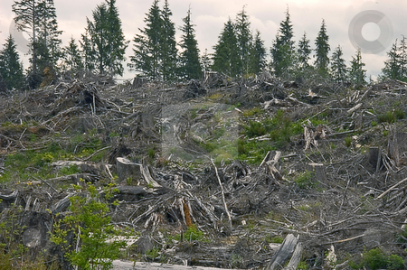 Area of Forest Clear Cut stock photo, This photo show an area of a mountain forest that has been clear cut, depicts the barrenness. by Valerie Garner