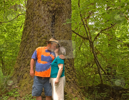 Middle Aged Couple Kissing in Rain Forest stock photo, This middle aged Caucasian couple are sharing a cute kiss in front on a massive ancient cedar tree in a rain forest. by Valerie Garner