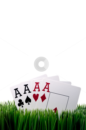 A vertical image of four ace playing cards in grass with a white stock photo, A vertical image of four ace playing cards in grass with a white background by Vince Clements