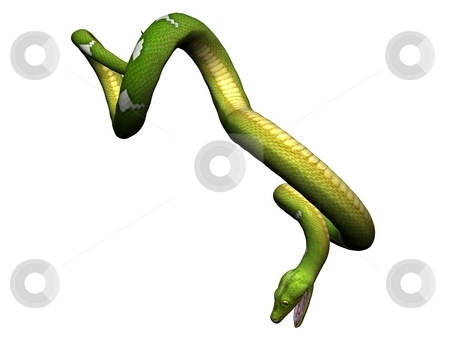Hanging green python stock photo, Green python rendered on white background by Patrik Ruzic