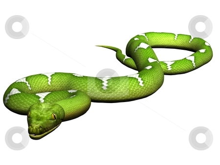 Crawling green python stock photo, Green python rendered on white background by Patrik Ruzic