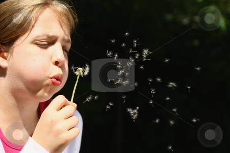 Girl blowing dandelion stock photo, Girl blowing dandelion by Gregory Dean