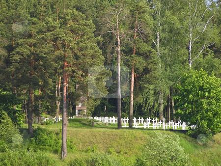 Cemetery stock photo, Cemetery crosses in sunny day by Sergej Razvodovskij