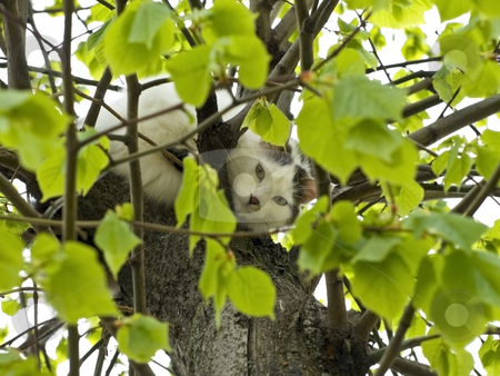 Cat on the tree stock photo, Black and white cat sitting on the tree with green leaves by Sergej Razvodovskij
