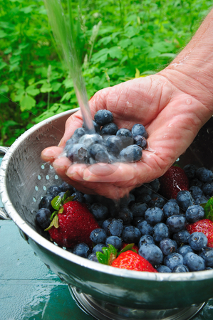 Rinsing Fresh Berries stock photo, Washing off fresh picked blueberries and strawberries by the handful under clean running water by Lynn Bendickson