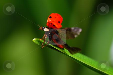 Ladybird stock photo, red speckled   ladybird on green grass by Jolanta Dabrowska
