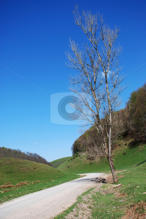 Environment stock photo, Ecologic environment of Romania by Dragos Iliescu