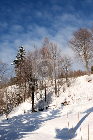 Trees stock photo, Trees in winter season by Dragos Iliescu