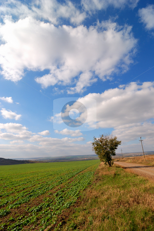 Environment stock photo, Ecologic environment of Romania by Dragos Iliescu