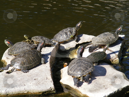 Turtle pond stock photo, A turtle pond with 7 turtles by Anna Paz