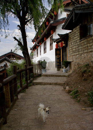 Old City, Lijiang, Yunnan Province, China Dog stock photo, Dog in front of inn, Old Town, Lijiang, Yunnan Province, China by William Perry