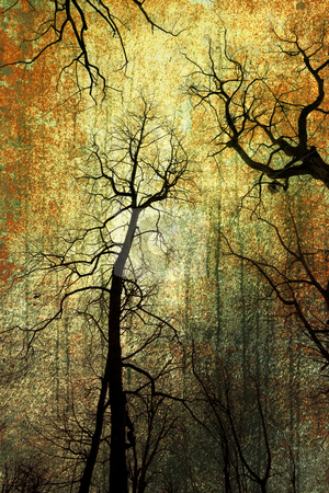 Grunge forest stock photo,  by Christophe Rolland