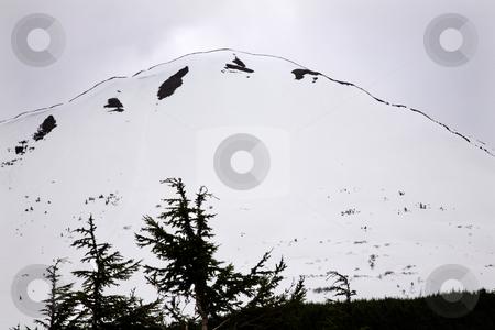 White Snow Mountain Outline Tree Seward Highway Anchorage Alaska stock photo, White Snow Mountain Tree Outlined against Sky, Seward Highway, Anchorage, Alaska by William Perry