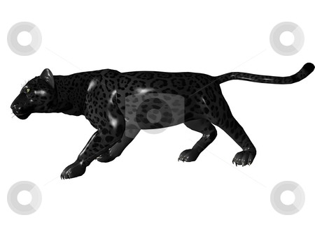 Stalking black panther stock photo, 3D rendered image of Black panther on white background an isolated by Patrik Ruzic