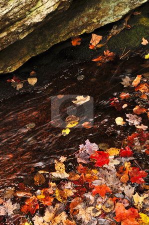 Autumn leaves in lake stock photo, Shore of fall forest with colorful leaves floating in water by Elena Elisseeva
