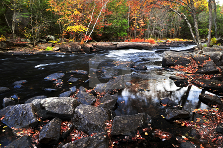 Fall forest and river landscape stock photo, Forest river in the fall. Algonquin provincial park, Canada. by Elena Elisseeva