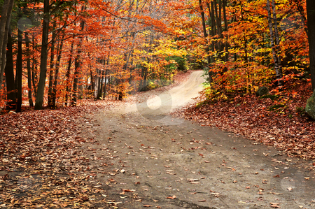 Autumn landscape with a path stock photo, Trail through group of colorful trees in autumn park by Elena Elisseeva
