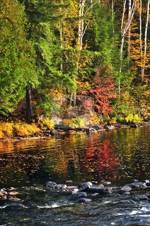 Fall forest and lake shore stock photo, Lake shore of fall forest with colorful reflections by Elena Elisseeva