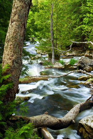 River through woods stock photo, Water rushing by trees in river rapids in Ontario Canada by Elena Elisseeva