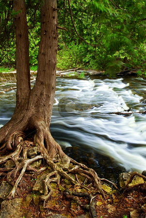 River through woods stock photo, Water rushing by tree in river rapids in Ontario Canada by Elena Elisseeva