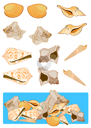 Assorted Shells stock vector clipart, Vector Illustration of various sea shells, drawn separately and grouped together. by Robert Gebbie