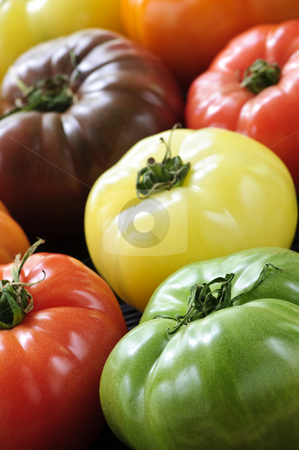 Heirloom tomatoes stock photo, Close up group of multi colored heirloom tomatoes by Elena Elisseeva