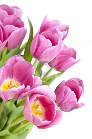 Pink tulips stock photo, Pink tulips with green leaves isolated on white background by Elena Elisseeva
