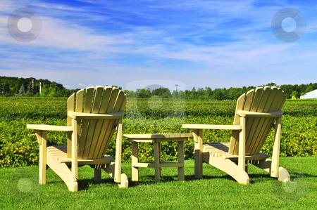 Chairs overlooking vineyard stock photo, Muskoka chairs and table near vineyard under blue sky by Elena Elisseeva