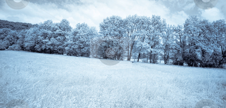 Infrared forest stock photo, Infrared panoramic picture of a beautiful forest in the countryside blue toned by Laurent Dambies
