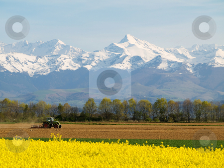 Rape field and mountains stock photo, Scenic  landscape of a rapeseed field with tractor and with French Pyrenees mountains in the background by Laurent Dambies