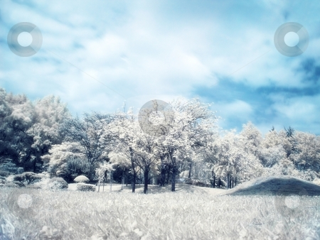 Japanese garden stock photo, Infrared panoramic  landscape of a japanese garden orton filter applied by Laurent Dambies