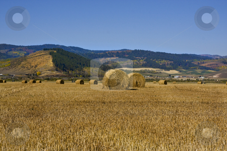 Mountain Farm stock photo, Grain field in the autumn with mountains in the background by Mark Smith