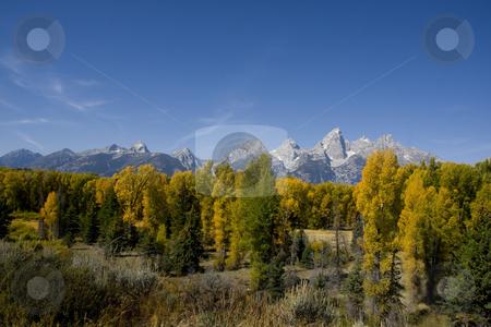 Grand Teton National Park stock photo, Fall  beauty Of Grand Teton National Park with blue sky by Mark Smith