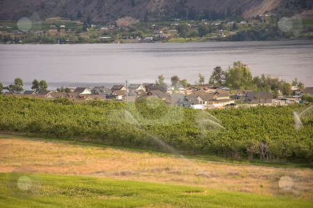 Irrigated Apple Orchard and Lakeside Community stock photo, This beautiful landscape  show an apple orchard with sprinklers irrigating and a small lakeside community of houses next to Lake Osoyoos, Washington. by Valerie Garner