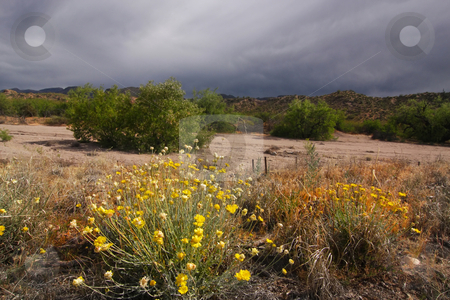 Desert Spring stock photo, Spring in the desert showing cactus and spring flowers in bloom by Mark Smith