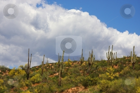 Deseret Spring stock photo, Spring in the Azorina desert with clouds by Mark Smith