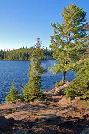 Evening stock photo, Sunny day in the lake shore in Algonquin Park by Pavel Cheiko